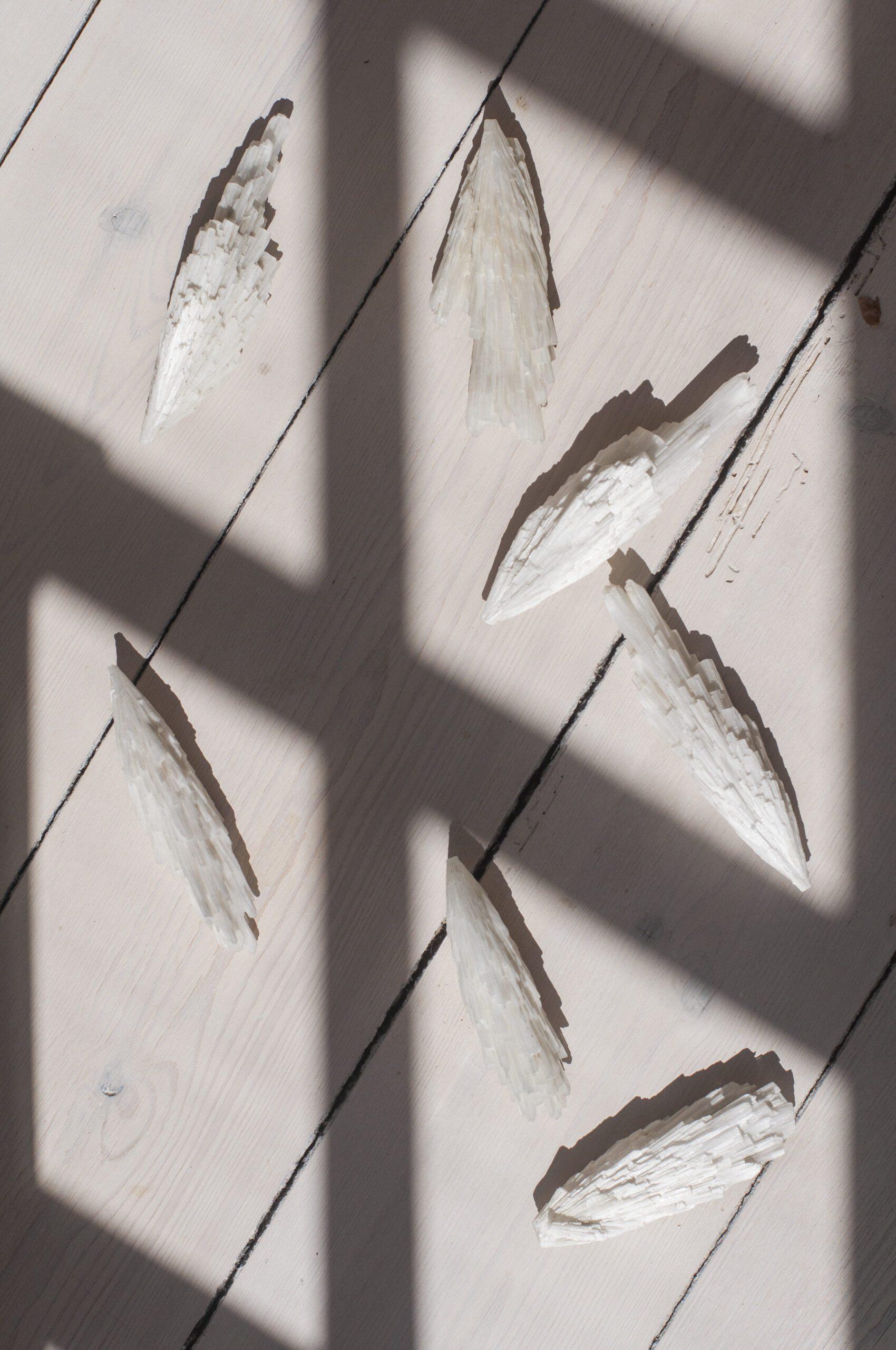 Rå scolosit